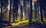 Choosing an email service provider: Focus on the trees or the forest?