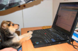 Which email software do they use? Sniff out any ESP